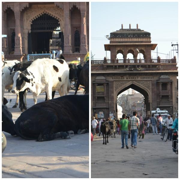 Jodhpur collage